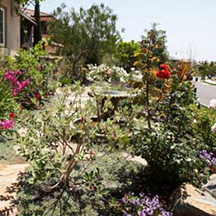 ENCINITAS: Learn California-friendly landscaping March 5