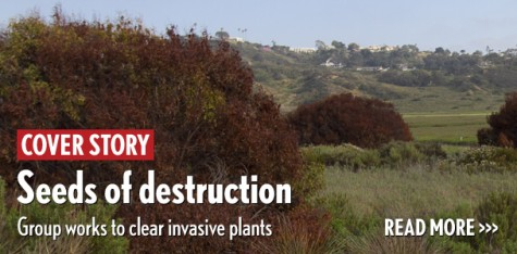 Seeds of destruction: Group works to clear invasive plants