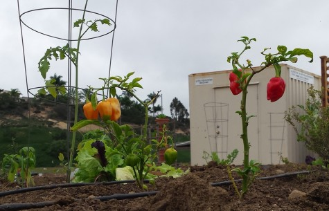 After years of effort, Encinitas Community Garden begins to sprout