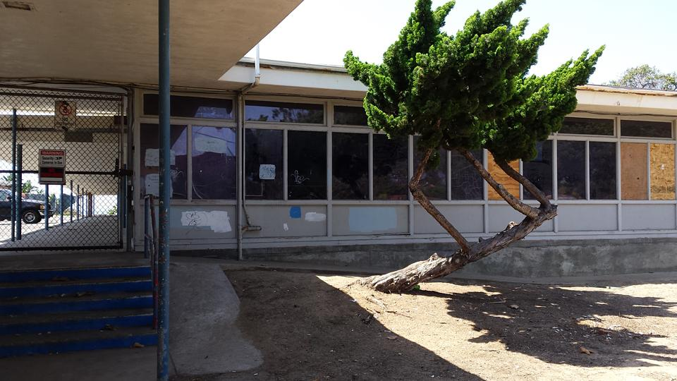 The former Pacific View school site in downtown Encinitas, pictured in late August, requires significant cleanup and restoration after years of neglect. (Photo by Susan Whaley)
