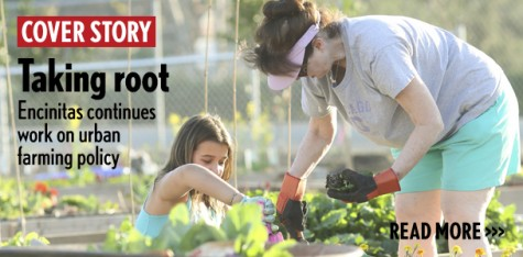 Taking root: Encinitas continues work on urban farming policy