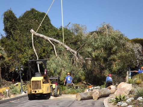 Botanic Garden in Encinitas loses historic trees to heavy winds