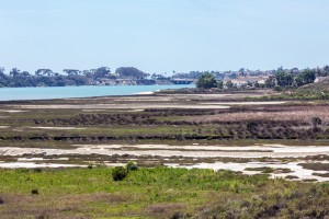 The shores of Agua Hedionda Lagoon, pictured April 20, are relatively untouched by human use as part of a preserve. (Photo by Jen Acosta)