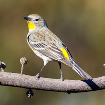 Protect birds from hitting your home's windows using decals and foliage. (StatePoint)