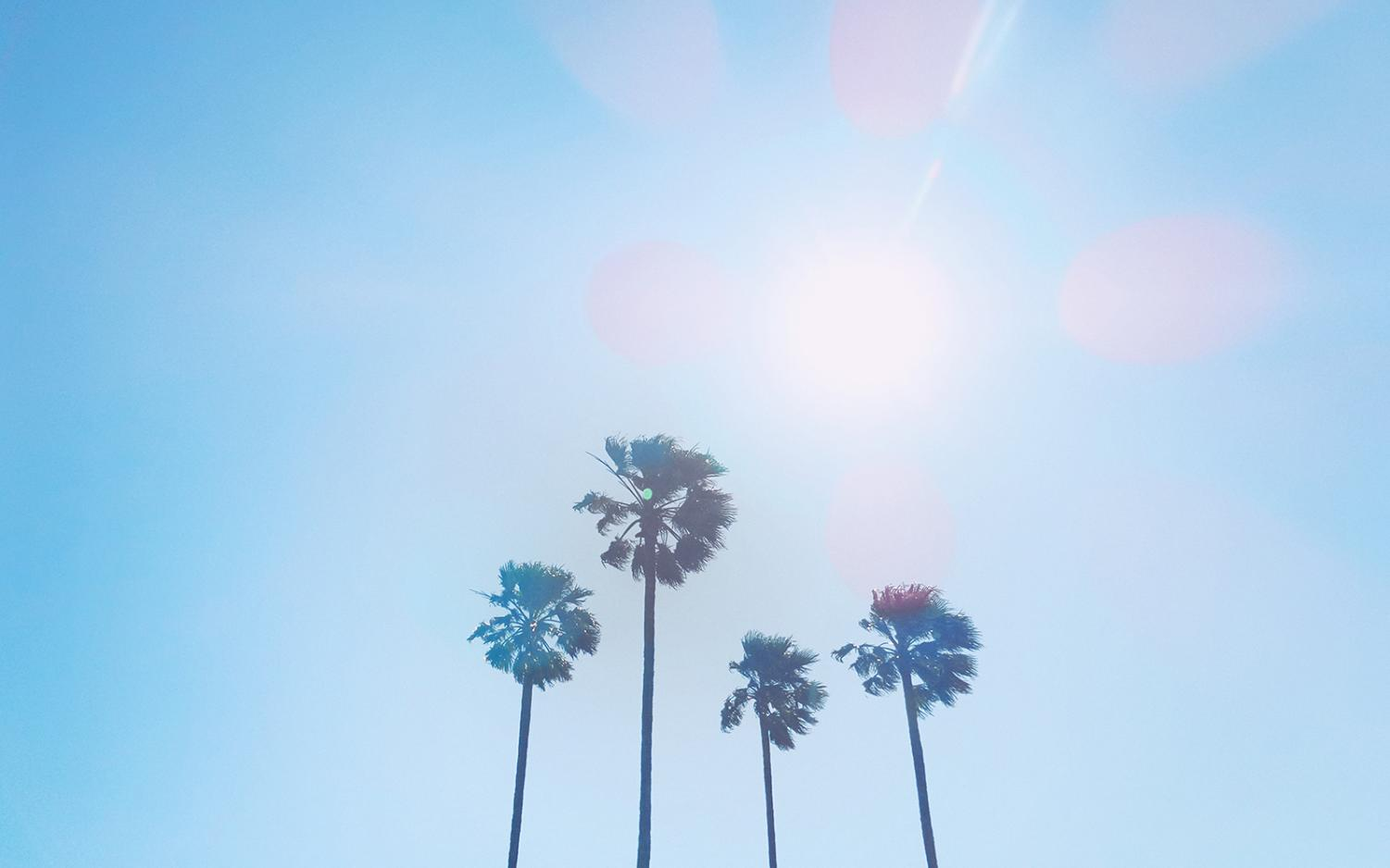 Sun, wind, trees. (Photo by Franck V via Unsplash)