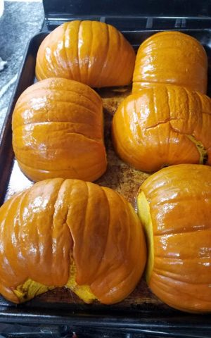 Roasted pumpkins are ready to puree for homemade pumpkin pie. (Photo by Laura Woolfrey Macklem)