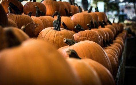 Pumpkins. (Photo by Freddie Collins, Unsplash)