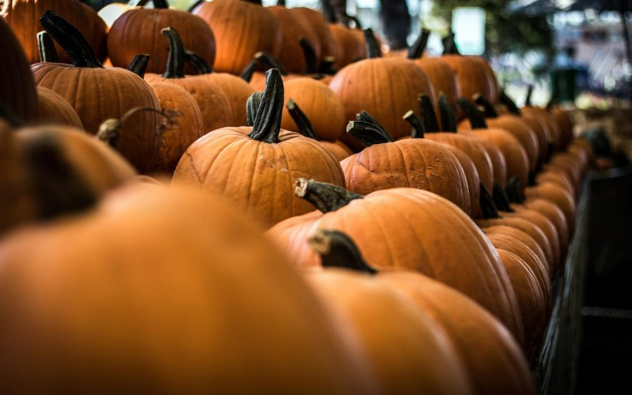 Pumpkins. (Photo by Freddie Collins, Unsplash)